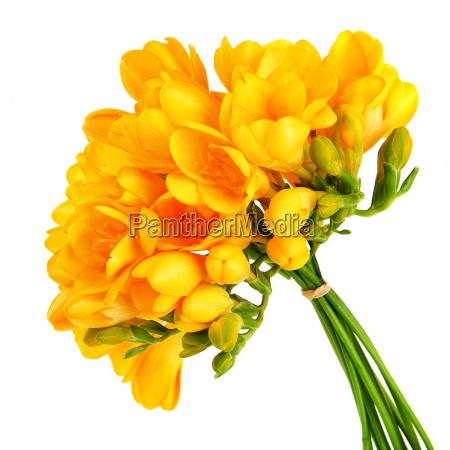 bouquet von einem schoenen gelben blueten