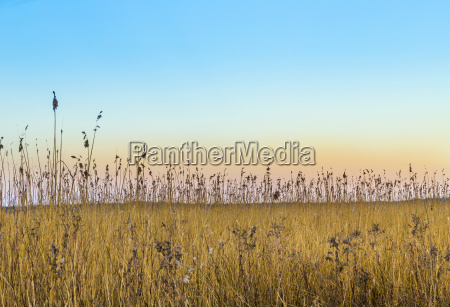 backwater landscape at the island of