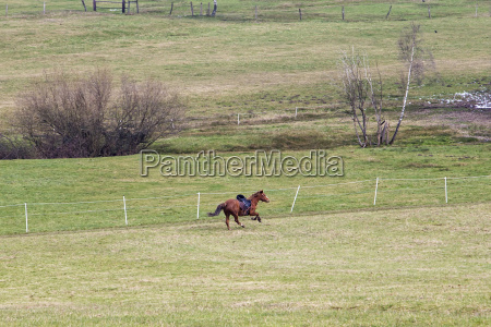 horse running in gallopp over the