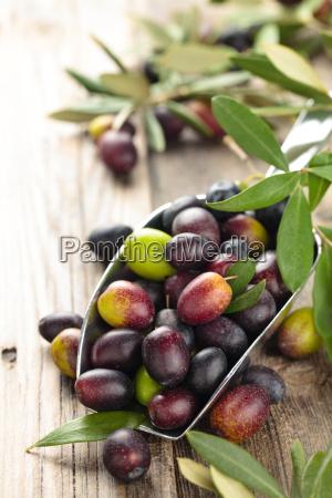 fresh olives in scoop