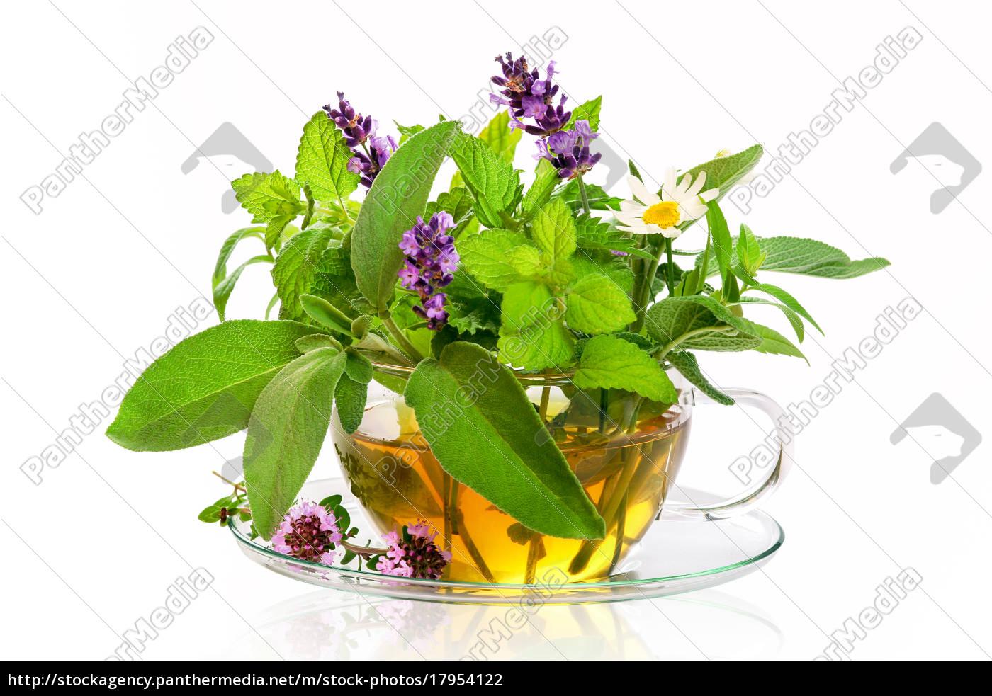 Ganz und zu Extrem Frische Kräuter für Tee - Stock Photo - #17954122 - Bildagentur &CO_11