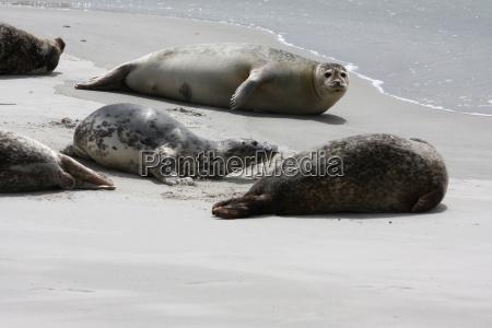 mammal animals beach seaside the beach