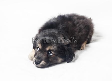 netter kleiner welpenhund