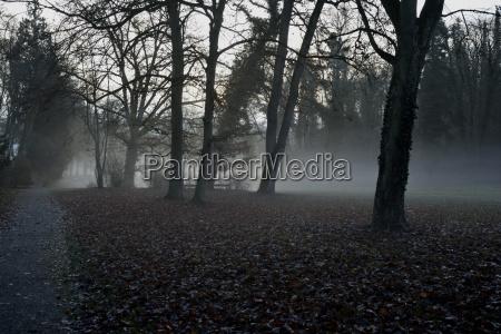 fahrt reisen baum park winter nebel