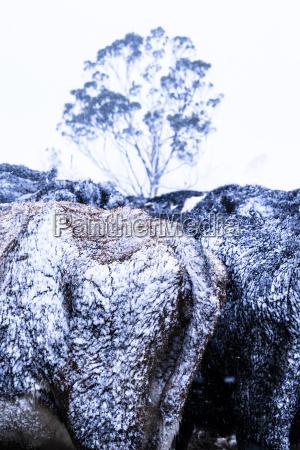 snowfall on farmland and animals across