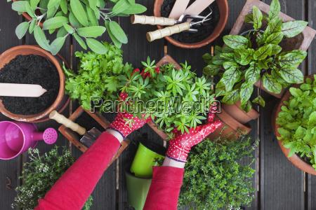 gardening potting medicinal and kitchen plants