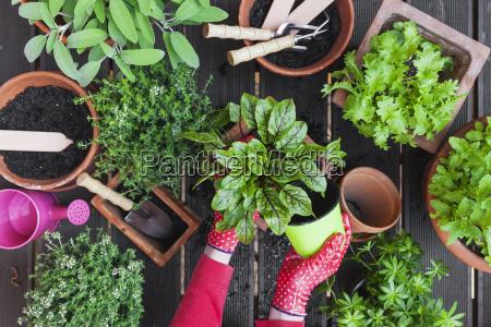 gardening medicinal and kitchen plants