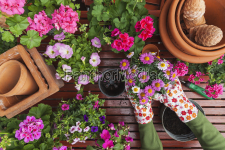 gardening different spring and summer flowers