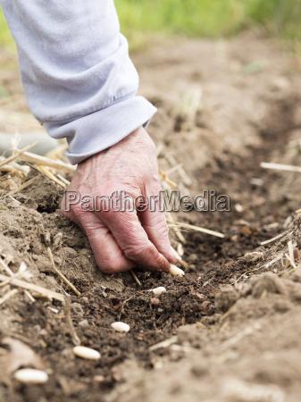 garten landarbeit hobby deutschland brd bundesrepublik