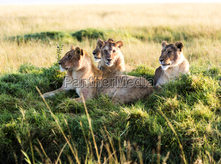 fahrt reisen tier saeugetier afrika kenia