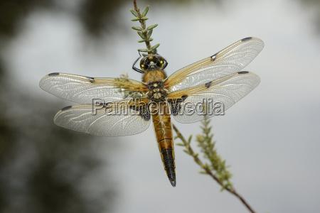tier insekt tragflaeche fluegel outdoor freiluft