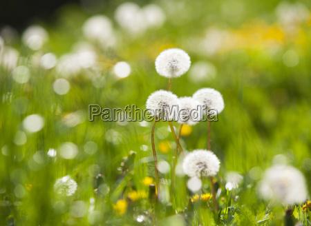 blume pflanze gewaechs sommer sommerlich austria
