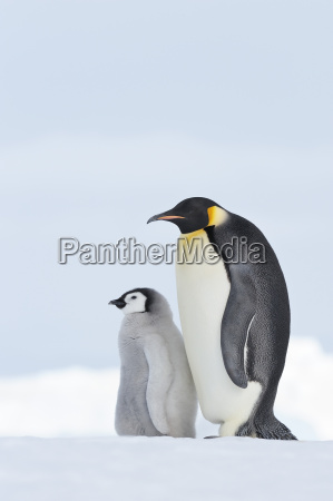 fahrt reisen kalt kaelte pinguin outdoor