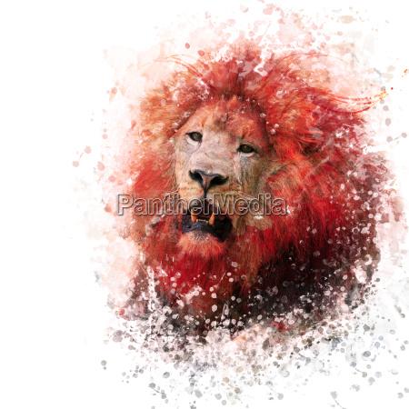 lion head aquarell