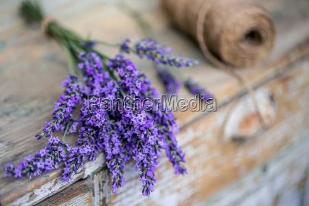buendel von lavendelblueten