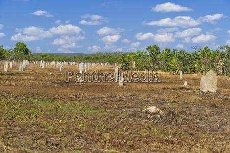 termite halterungen