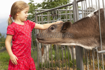 young girl petting calf