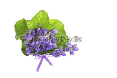 violette bluete