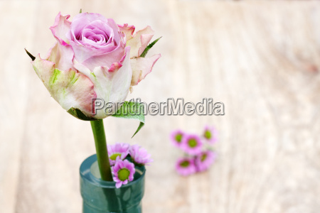 pastel rose on a wooden table