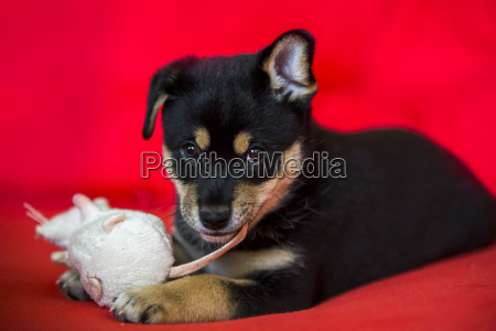 cute puppy on red bed with