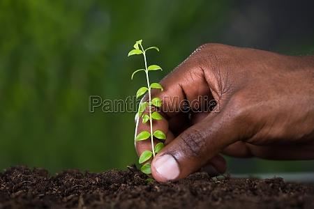 persons hand planting sapling