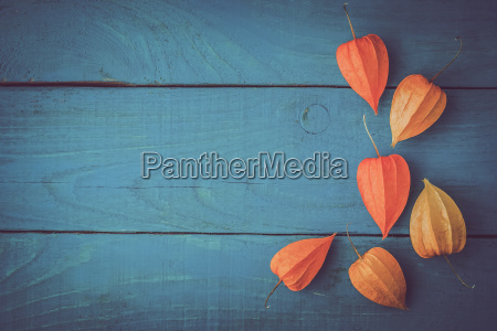 orange physalis on the wooden