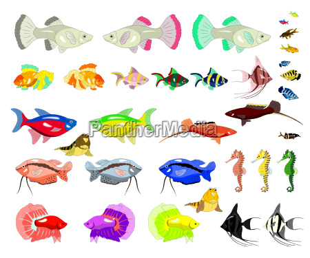 aquarium fish isolated on white background