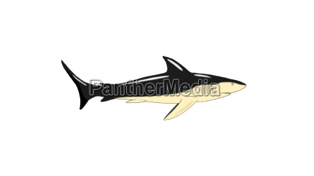 shark swimming isolated on white background