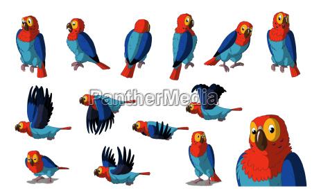 ara papagei getrennt auf weissem hintergrund