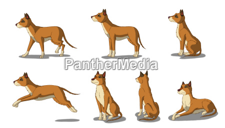 brown dog isolated on white background