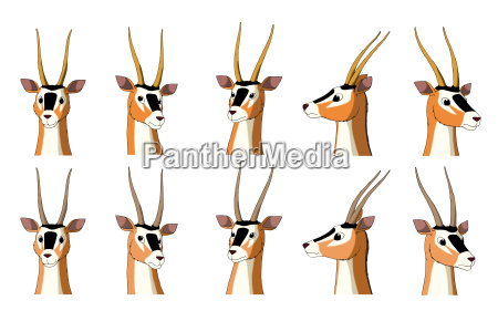 african antelope gazelle isolated on white