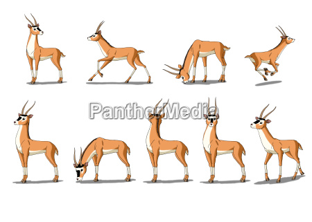 antelope gazelle image isolated on