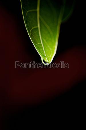 blatt baumblatt umwelt regentropfen outdoor freiluft