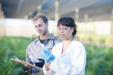 scientist and worker in plant nursery