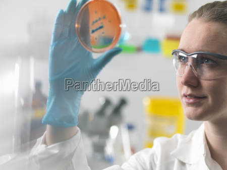 female scientist examining microbiological cultures in