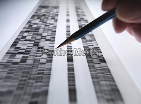 wissenschaftler, sehen, dna-gel, in, der, genetik, forensik, pharmaforschung, biotechnologie - 18170736