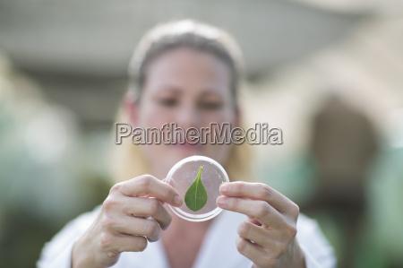 female scientist holding up leaf sample