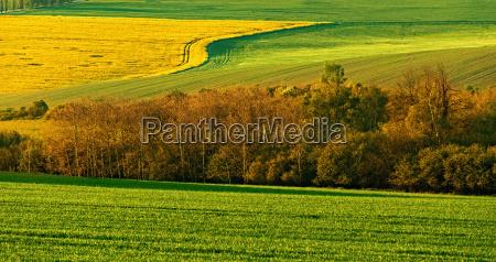 beautiful spring rural landscape