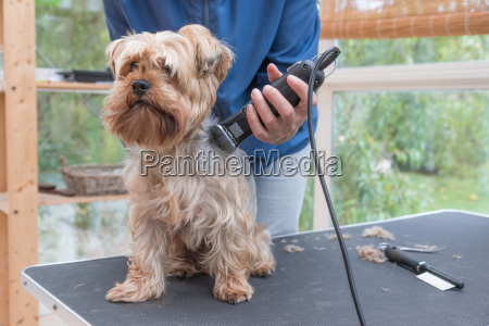 haustier kuscheltier hund ausruestung geraetschaft ausstattung