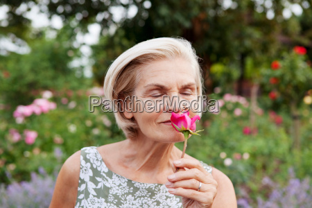 mature woman smells rose in rose