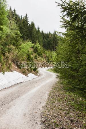 gravel road in rural forest