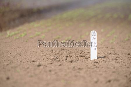 nahaufnahme von saemling label auf kraeuterfarm