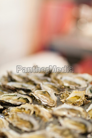 close up of bowl of oysters