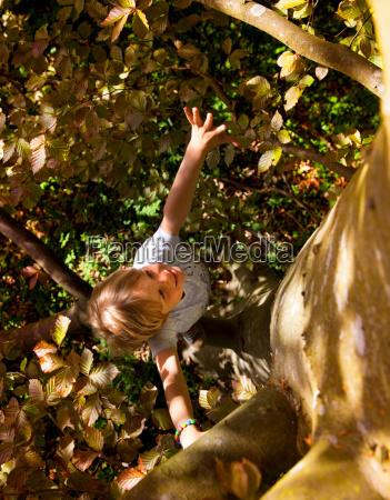 smiling boy climbing tree