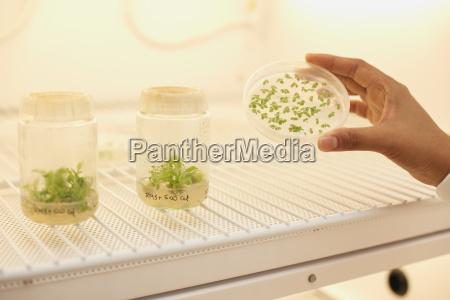 female scientist holding plant sample in