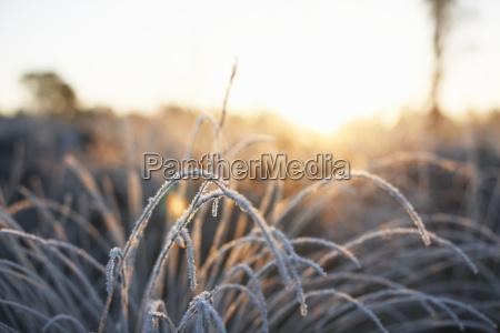 botanik sonnenlicht freiheit ungebundenheit frost outdoor