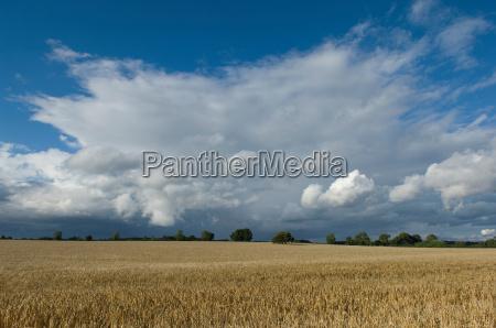 umwelt landwirtschaft ackerbau wolke feld outdoor