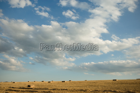 harvested bales of wheat in a