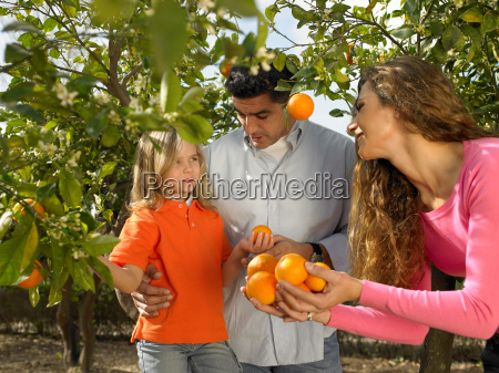 young girl picking oranges with parents