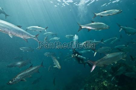 fisch freiheit ungebundenheit hobby atlantik salzwasser
